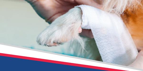 Pet First Aid Awareness