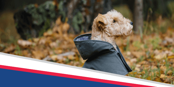 Is Your Pet Prepared?