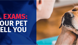 Annual Exams: What Your Pet Can't Tell You