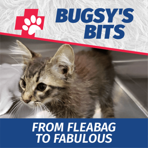 Bugsy's Bits - Fleabag to Fabulous