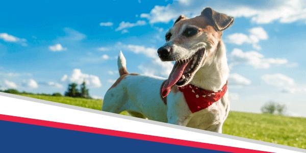 Dog (Breath) Days of Summer Dental Special!