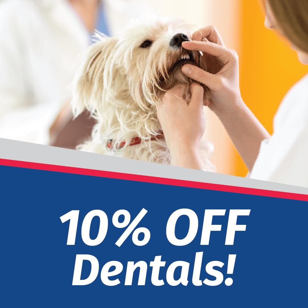 10% Off Your Pet's Dental in September
