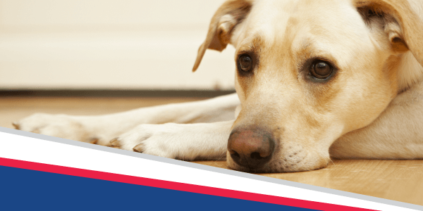 Is Your Pet in Pain?