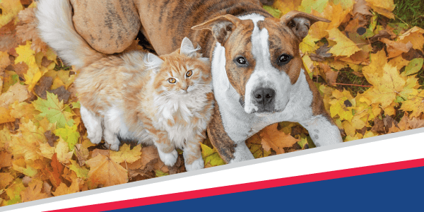 Gobble Up These Thanksgiving Pet Safety Tips!