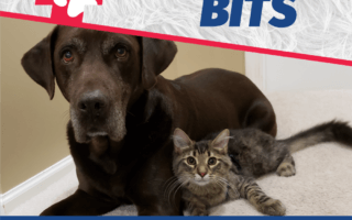 Bugsy's Bits - This is Your Pet's Best Shot
