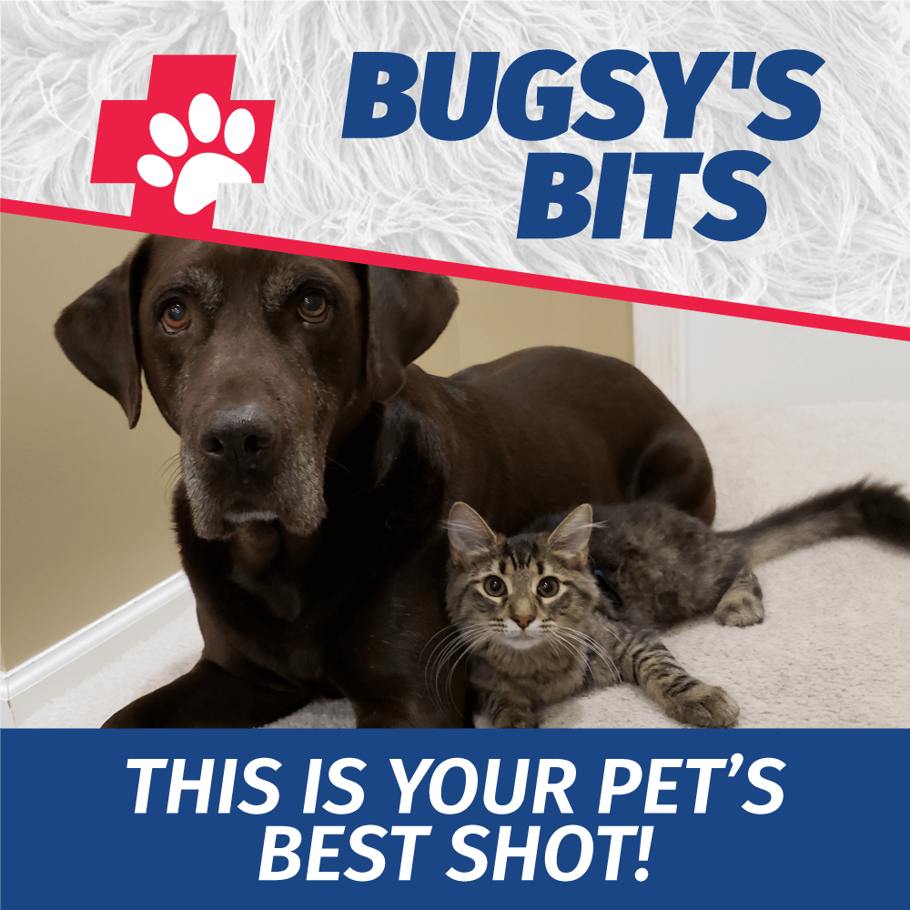 Bugsy's Bits: This Is Your Pet's Best Shot!