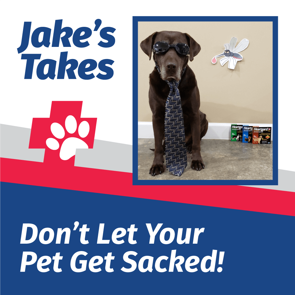 Jake's Take: Don't Let Your Pet Get Sacked!