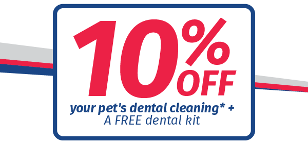 Save 10% on your pet's dental in February - Bell Veterinary Hospital