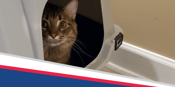 Bugsy's Bits: No Kid-neying About Litterbox Problems