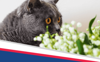 Don't Poison Your Pet! Pet Poison Prevention Week is March 15 – 21