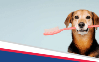 Save 10% on your pet's dental cleaning in February - Bell Veterinary Hospital