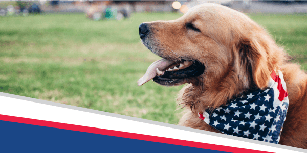 4 for the 4th: Pet Safety Tips