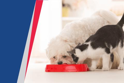 : Sport Mix Pet Food Recalled