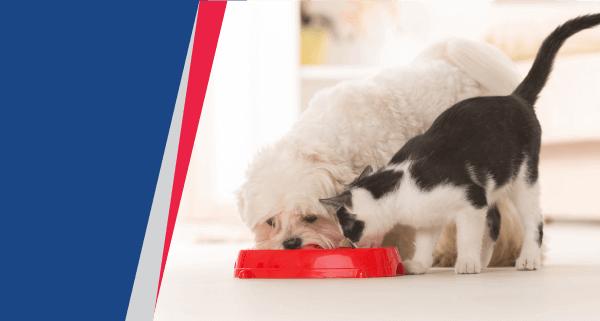 Sport Mix Pet Food Recalled